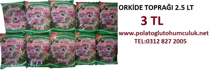 Orkide-Topra.jpg
