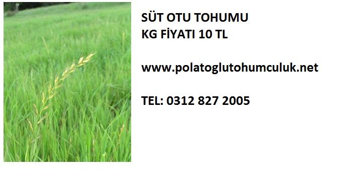 St-Otu-Tohumu_2013-12-16.jpg