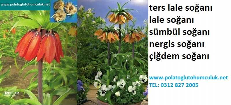 Ters-lale-sogani_2013-12-16-2.jpg